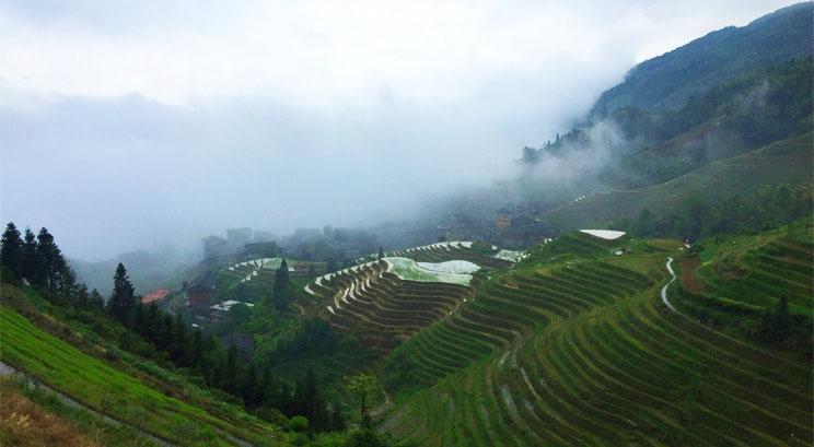 longji rice terrace in summer