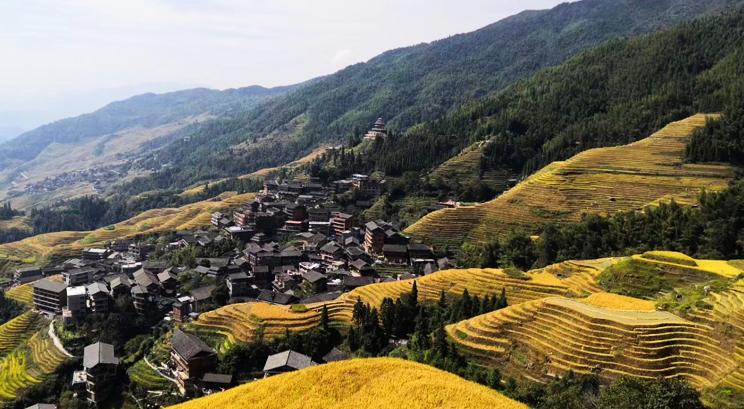 terrazas arrozales en Longji