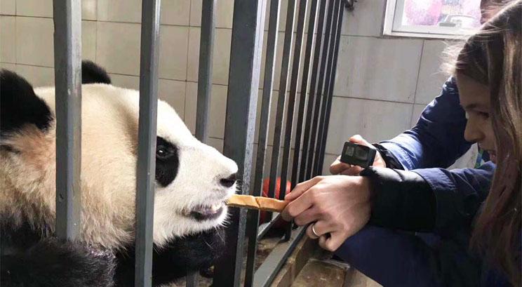 voluntarios en el centro de oso panda