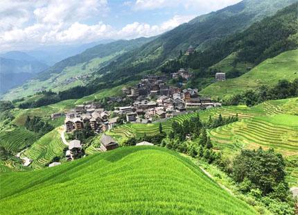 rizières en terrasses de Longji en été