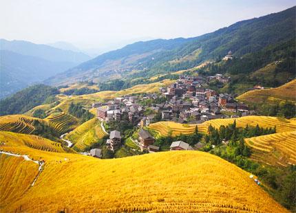 rizières en terrasse de Longji en automne