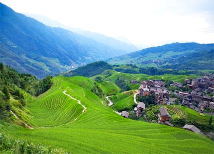 rizières en terrasse de Longji en été