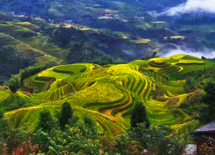 rizière en terrasse de Longji