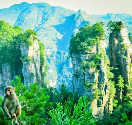 le parc de Zhangjiajie