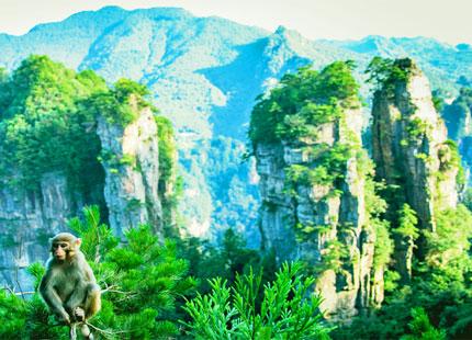 mont Tianzishan à Zhangjiajie