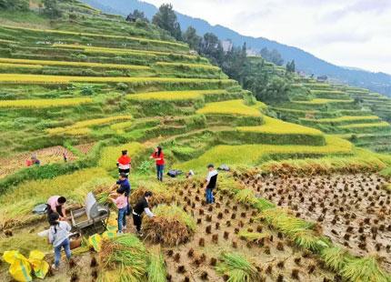 rizières de Tangan