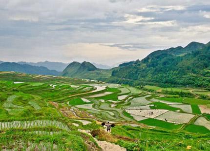 rizières de Gaoyao