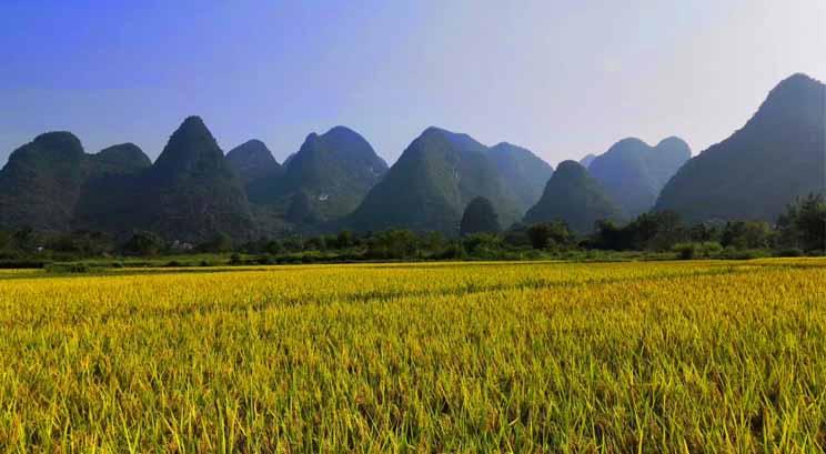 paysage de la campagne de Yangshuo